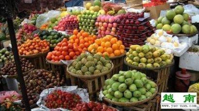 越南特产水果图片上的越南水果必尝代表