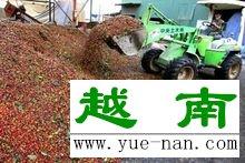越南咖啡(图4)