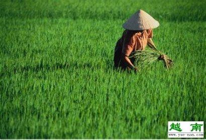 从yuenan到越南芽庄要多少时间