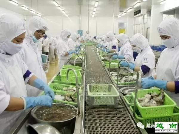 2017年越南金瓯省力争实现出口金额达11亿